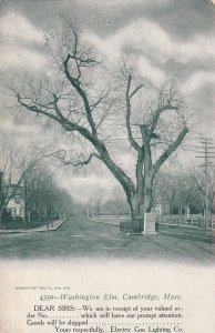 CAMBRIDGE, Massachusetts, 1900-1910's; Washington Elm