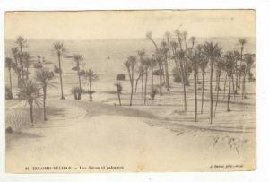 COLOMB-BECHAR.- Les dunes et palmiers, PU-1915