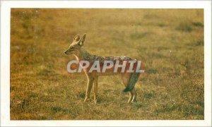 Postcard Old Jackal Safari Prisunic