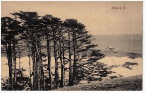 Trees on sea coast , Japan , 1910s-30s