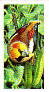Brooke Bond Tea Trade Card Wild Birds In Britain No 9 Hawfinch