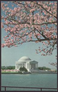 Jefferson Memorial,Washington,DC Postcard