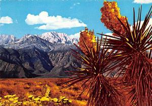 Desert - Joshua Tree