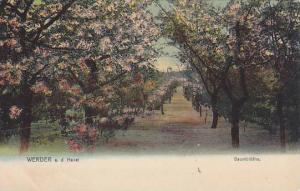 Line-Up Trees, Baumbluthe, Werder a. d. Havel (Brandenburg), Germany, 1900-1910s
