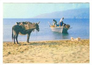 Greece , 50-70s : Typical seaside view