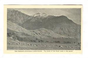 Droving sheep in New Zealand , 20-40s #3/3