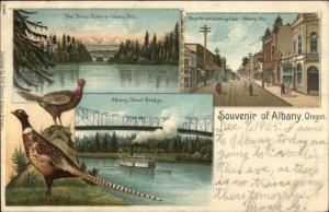 Albany OR Multi-View First St. Pheasants c1905 Postcard