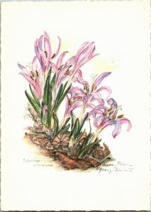 Spring Meadow Saffron Alpine Flower Vintage Postcard Q22