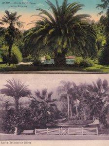 Lisboa Botanical Gardens Jardim Botanico Portugal 2x Postcard