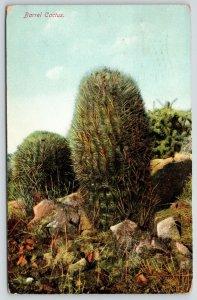 Redlands California~Barrel Cactus~Rocky Ground~1909 Postcard