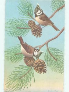 Pre-1980 Alfred Mainzer Postcard BEAUTIFUL BIRDS WITH PINECONES AC7089