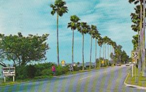 Florida Edgewater Drive Between Clearwater and Dunedin 1966