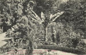 georgia russia, TBILISI TIFLIS, Banana Blossom in the Botanical Garden (1910s)