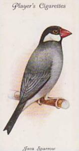 Players Cigarette Card Aviary And Cage Birds No. 40 Java Sparrow