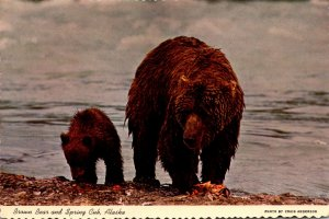 Alaska Alaskan Brown Bear and Spring Cub