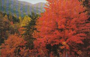 Fall Color Scene in the Great Smorky Mountain National Park Tennessee