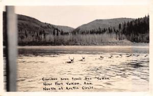 Yukon Canada~Caribou As Seen Steamer Yukon~North of Arctic Circle RPPC c1920