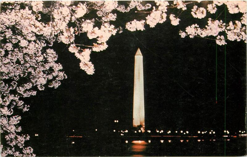 Washington monument by night Chery Trees blossoms
