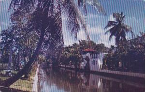 Florida Miami Canal Scene 1950