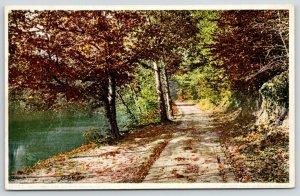 Washington DC~Zoo Park~Autumn Leaves on Rock Creek Road~c1910 Detroit Pub Co