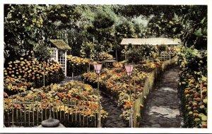 Missouri St Louis Botanical Garden Chrystanthemum Show In Japanese Manner