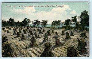 CLINTON, Iowa IA ~ Field of RIPENED CORN Banks Mississippi River 1914 Postcard