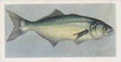 United Tobacco South Africa Vintage Trade Card African Fish 1937 No 22 Elf