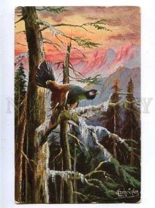 182865 Bird hunting grouse SCHROPLER Vintage postcard