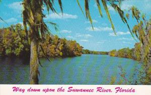 Florida Suwannee River Scene