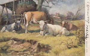 TUCK  1401; Country Charms , Quiet Pastures , 1904