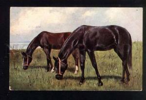 047428 HORSES Foal on Green Field vintage T.S.N.