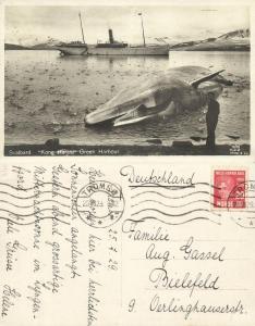 norway, SPITSBERGEN SVALBARD, Green Harbour, Steamer Kong Harald, Whale (1929)