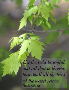 Scripture Art Postcard Set, Photograph of Lime Green Box-elder Tree Psalm 96 Joy