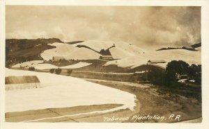 c1910 RPPC Postcard Tobacco Plantation Puerto Rico, A. Moscioni Photo Unposted