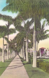 BOCA RATON CLUB, FL, 00-10s ;Royal Palm Walk & Entrance to Swimming Pool/Gardens