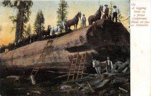 H73/ California Postcard c1910 Loggers Sequoia Redwood Log Horses 130