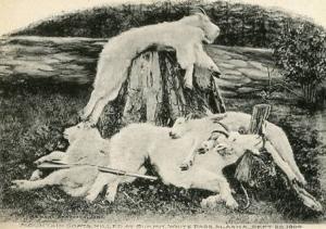 AK - White Pass, Mountain Goats Killed at the Summit - September 20, 1904