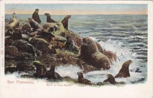 Seals On Seal Rocks San Francisco California