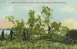 Old Witness Tree Main Street Vancouver Wash WA c1909 Antique Postcard E10