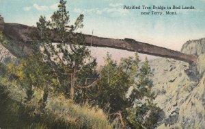 TERRY , Montana, 1900-10s ; Petrified Tree Bridge
