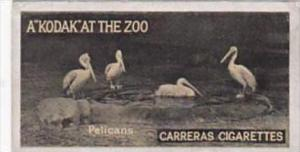Carreras Cigarette Card Kodak At Zoo 1st Series No 28 Pelicans