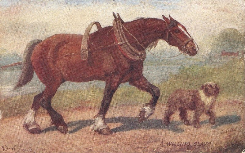 Norah Drummond. Horses and Dogs. Man's best friend  Tuck Oilkette PC # 9561