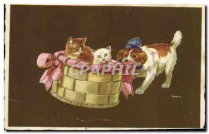 Old Postcard Cat Kitten Cats China