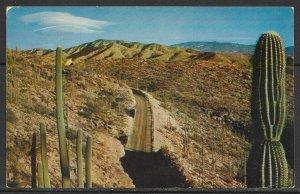 Arizona - Highway Through The Giant Saguaros - [AZ-193]