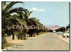 Modern Postcard La Cote Vermeille Saint Cyprien Vile One Palms allee