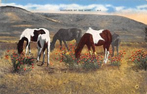 Horse Post Card Pastures of the West San Diego County, Caliornia, USA Unused