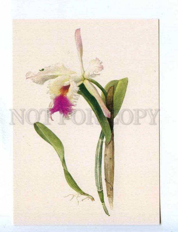 200396 Orchid by artist Shipilenko old postcard