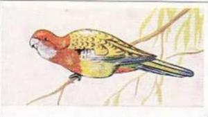 Sweetule Products Vintage Cigarette Card Tropical Birds 1954 No 1 Australian ...