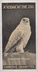 Carreras Cigarette Card Kodak At Zoo 1st Series No 4 Greenland Falcon