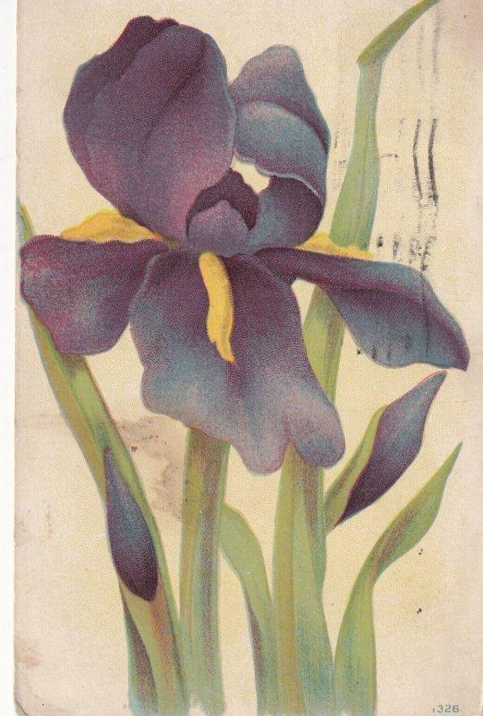 STILL LIFE, PU-1908; Purple & Yellos Iris Flower
